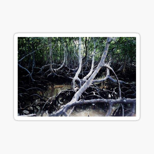 Mangroves Swamp Coastal Tropical Trees, Brasil Sticker