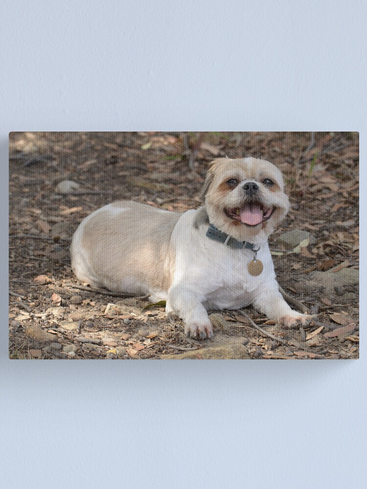 Alternate view of Baldy Harry Tired on a Walk Canvas Print