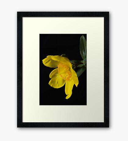 Yellow Framed Print