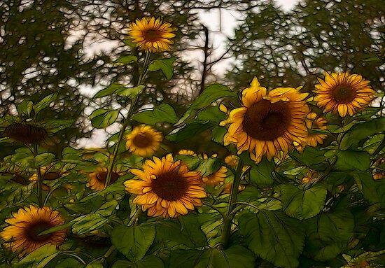 Sunflowers by Trevor Kersley