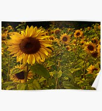Fractual Sunflowers Poster