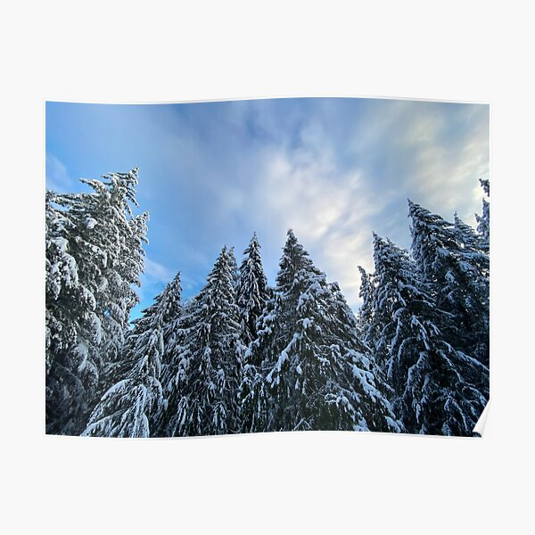 Snow Capped Evergreen Trees Poster