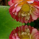 Lotus flower colour burn with effects by Alina Holgate