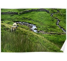 Yorkshire Dales. Poster