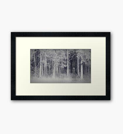 parallel forest 2 Framed Print