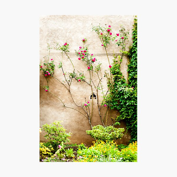Just Beautiful 2 Photographic Print