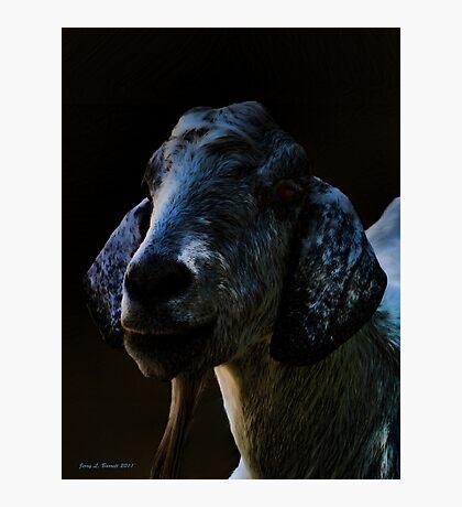 Goat Portrait Photographic Print