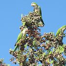 Mines a Pine Nut Gracias! by Pamela Jayne Smith
