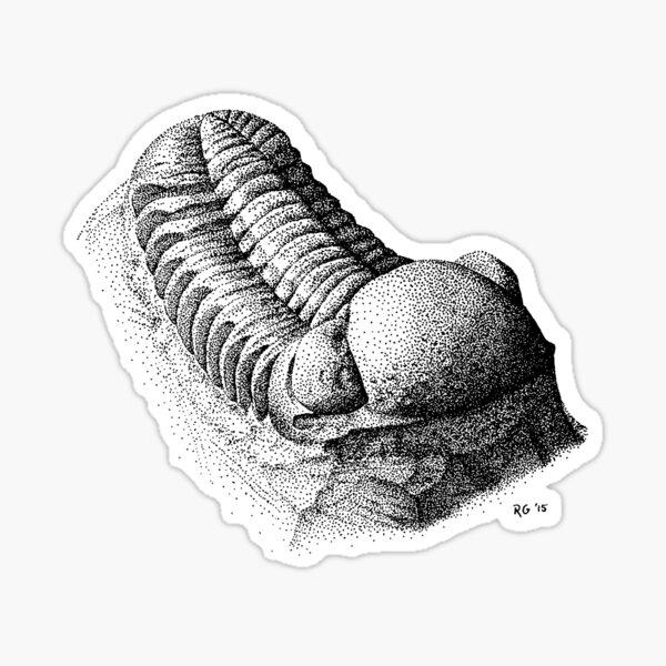 Phacops Trilobite Sticker