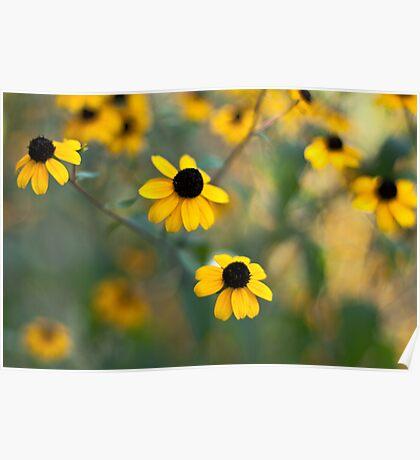 Yellow Softness Poster