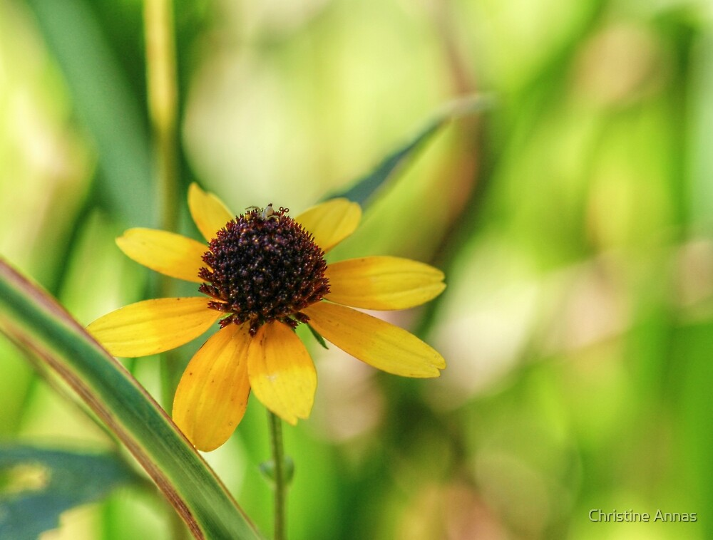 And A Tiny Spider On Top by Christine Annas