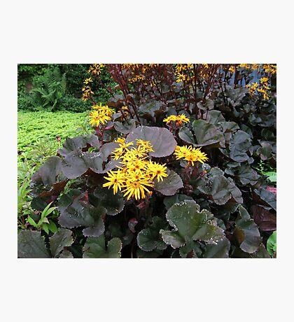 Golden Petals and Purple Leaves Fotodruck