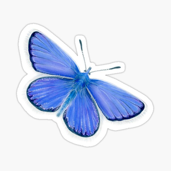 Adonis Blue Butterfly Watercolor Painting Artwork Sticker