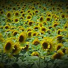 Sunflower Field Vignette by Debbie Robbins