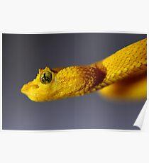 Eyelash Viper Poster