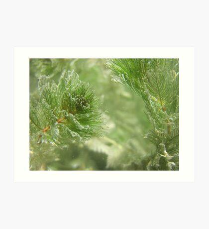 Christmas Weed  Art Print