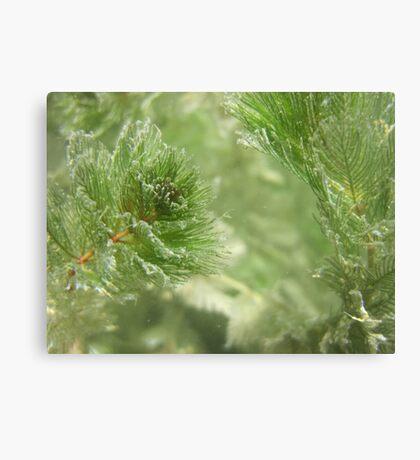 Christmas Weed  Canvas Print