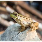 Frog on Rock by LizardSpirit