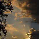 Ray of Hope ~ Dedication by Kimberly Chadwick