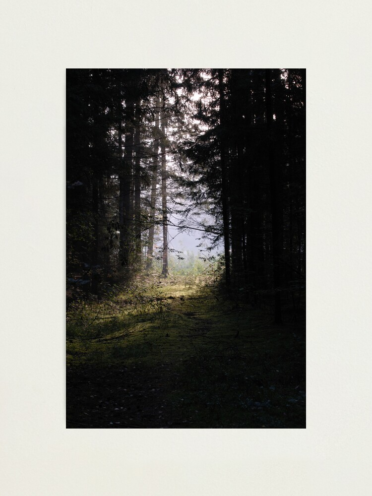 Alternate view of Forest pathway in morning lighting Photographic Print