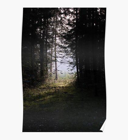Forest pathway in morning lighting Poster