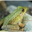 Light Green Frog by LizardSpirit