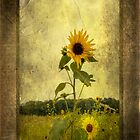 sunflower with textures by Bill Manocchio