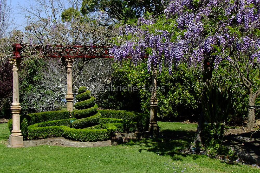 Wisteria Arbour by Gabrielle  Lees