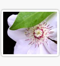 Clematis Sticker