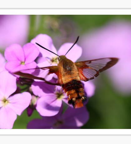 Hummingbird Moth Sticker