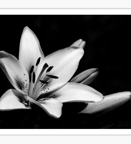 Black & White Lily Sticker