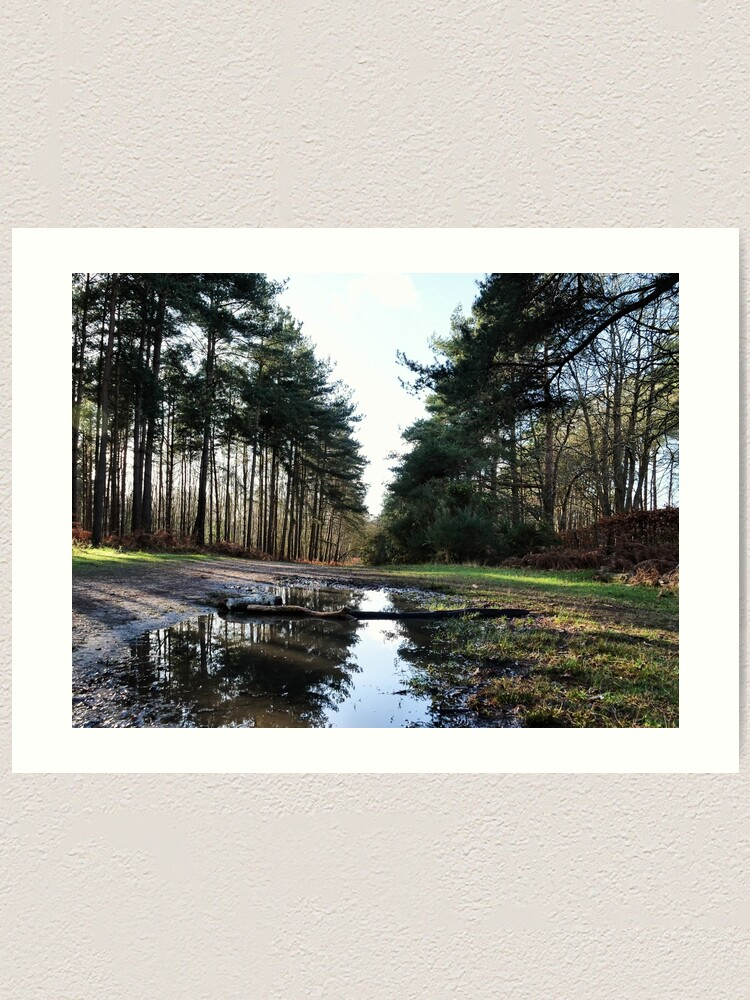 Alternate view of Reflection in Swinley Forest Art Print