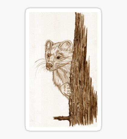 Pine Marten in pencil Sticker