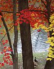 Fall - Woodlake by John Schneider
