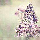 American Painted Lady Butterfly by Linda Trine