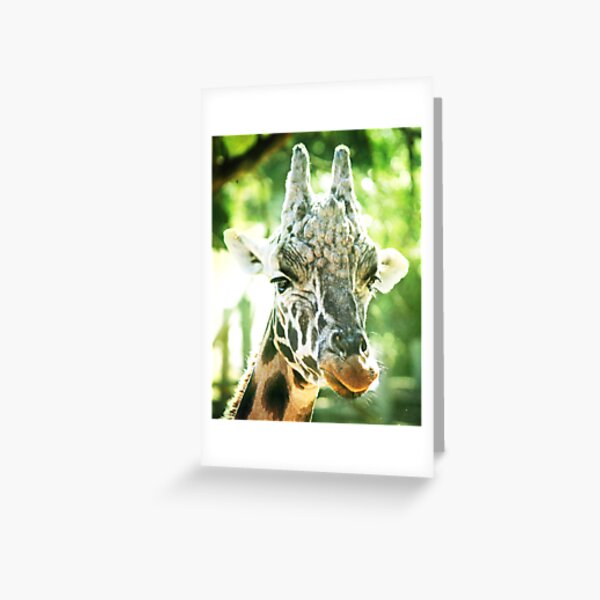 Tall and Mellow Greeting Card