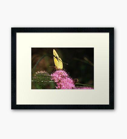 """""""Hey Dude"""" any more pollen up there? Framed Print"""