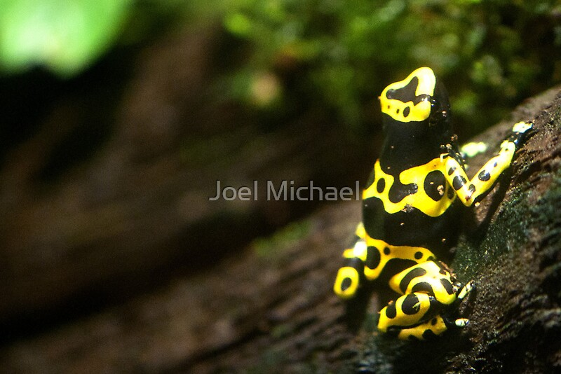 Poison dart frog london aquarium by joel michael for Frog london