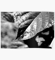 Leaf Contrast Poster