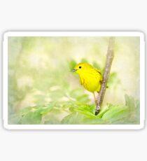 Yellow Warbler - Songbird Art Sticker