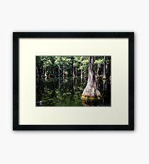 Florida Beauty 4 Framed Print