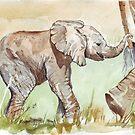 Baby Elephant walk by Maree Clarkson