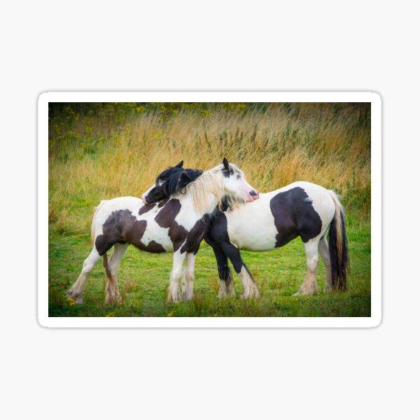 Horse Hug Sticker