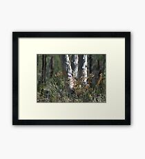 Conimbla Native Shrub Framed Print