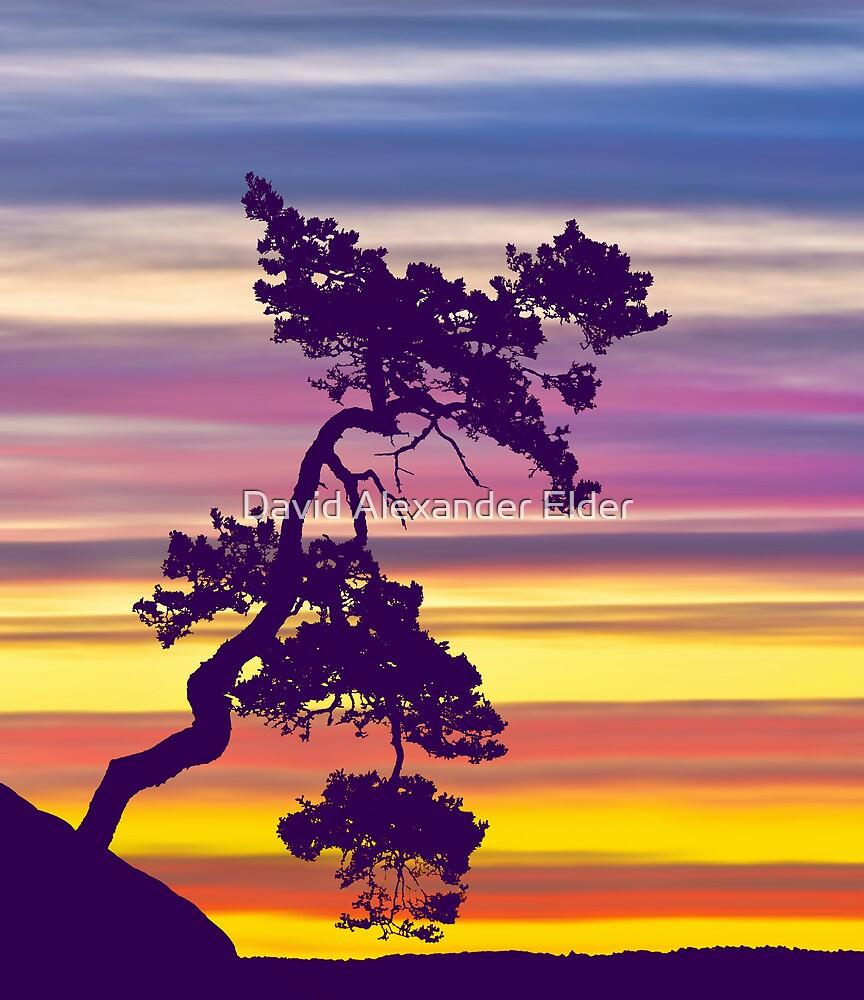 One Tree Hill Sunrise by David Alexander Elder