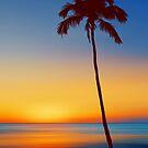 Palm Tree Beach Sunset by David Alexander Elder