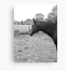 Watching the Pasture Grow Canvas Print