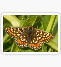 Marsh Fritillary Sticker