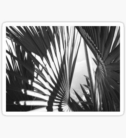 Palm Shapes  Sticker