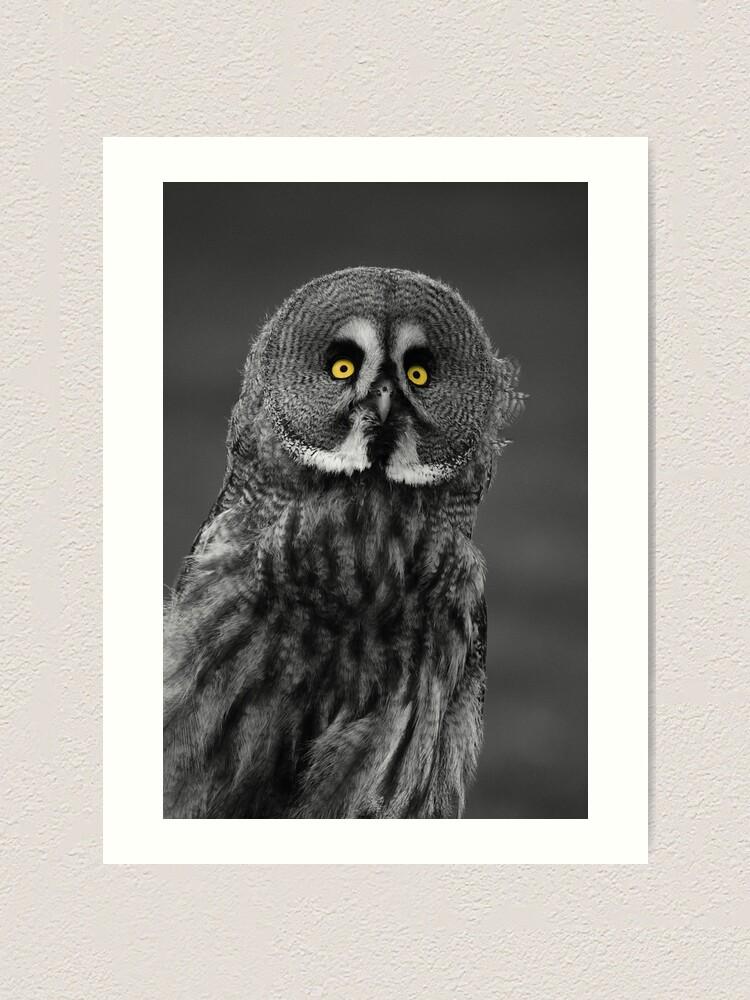 Alternate view of Great Grey Owl Art Print